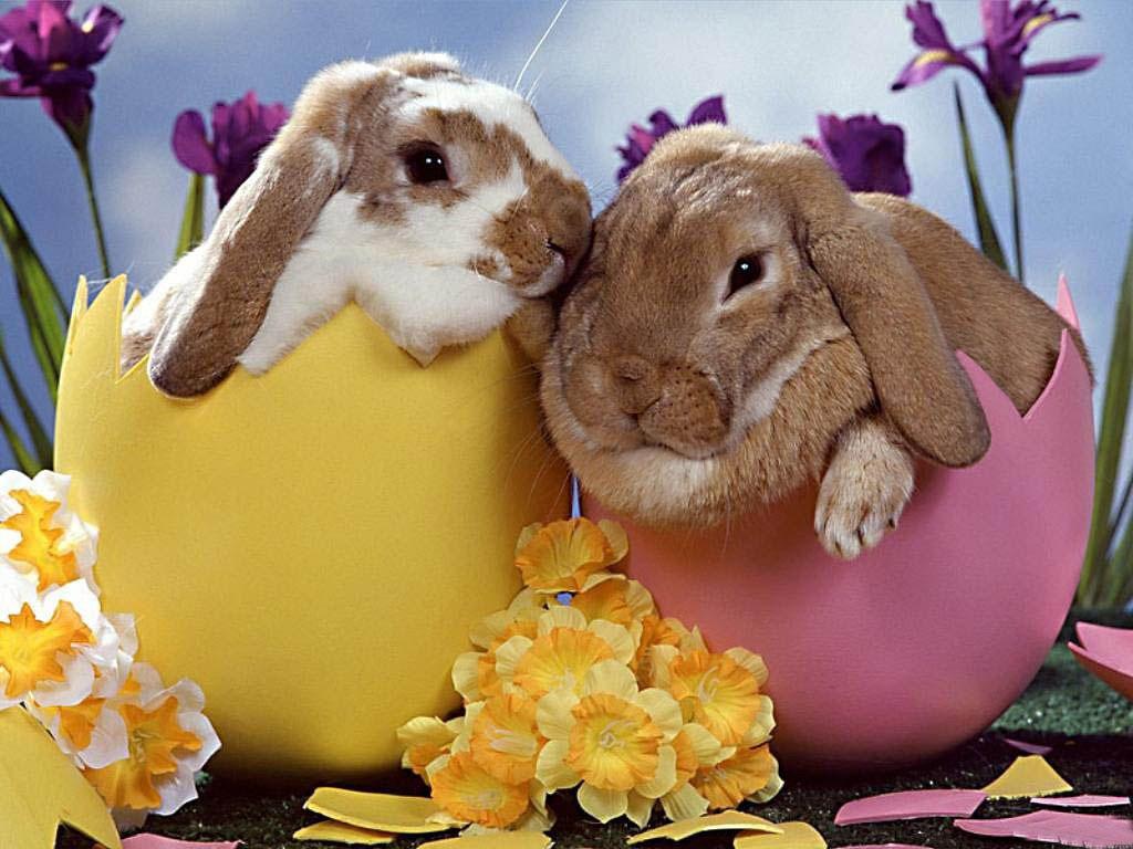 Kellemes Húsvéti Ünnepeket Kívánok !