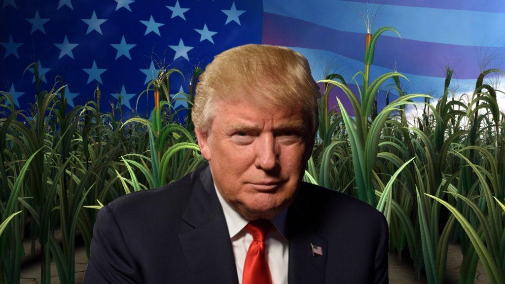 A Trump-kormányzat 12 milliárd dollár azonnali segélyt ad a farmereknek a vámtarifák miatti veszteségeik enyhítésére